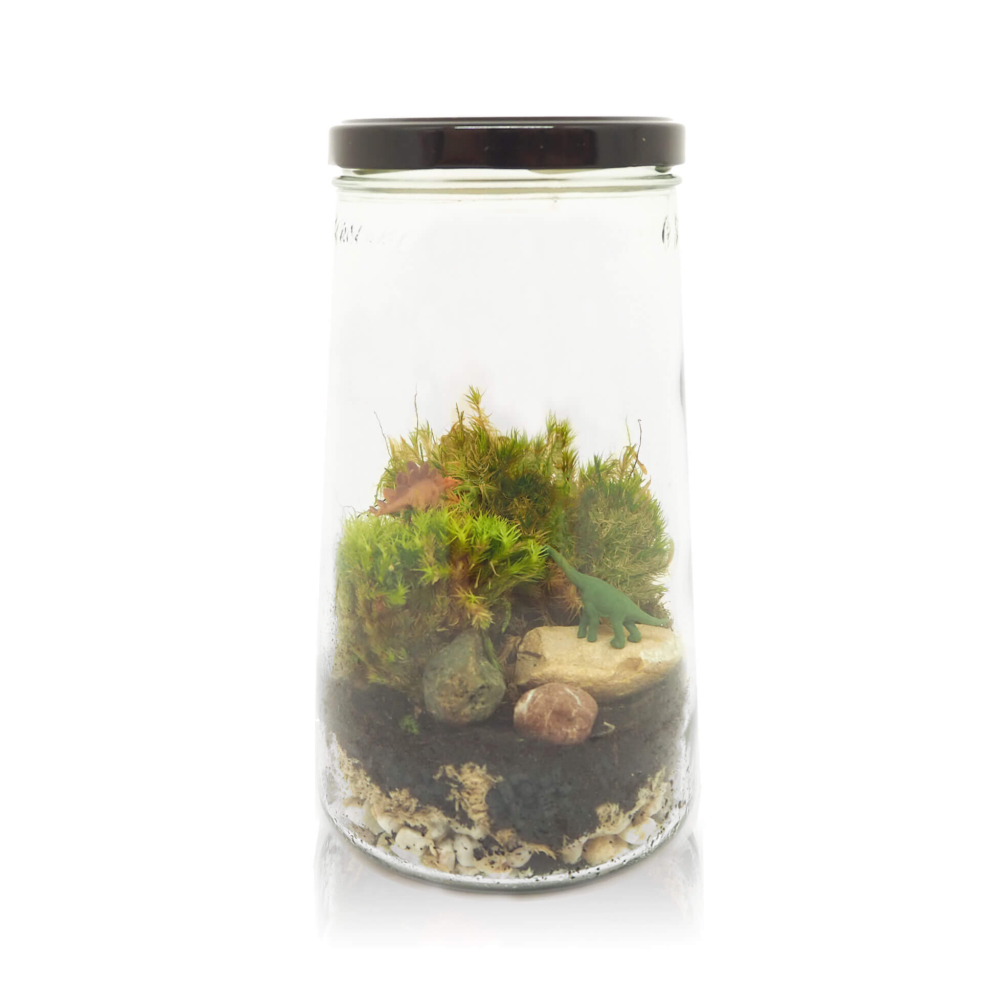 koop-ecosysteem-in-een-pot-inspickle-dino-medium-pot