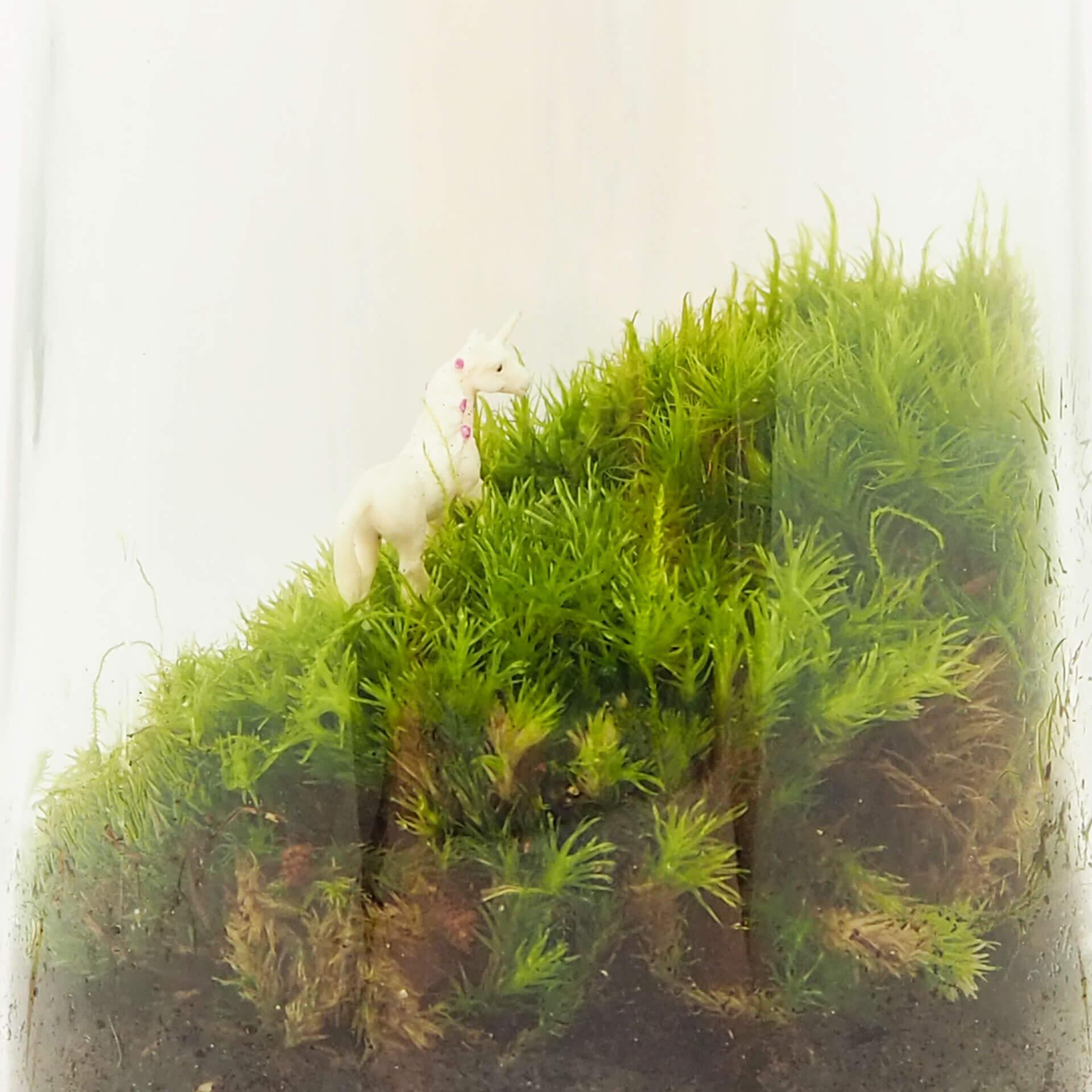 Voorkeur Eenhoorn ecosysteem in een Kesbeke pot - DIY kit medium &ZH67
