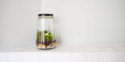 eenhoorn ecosysteem in een pot